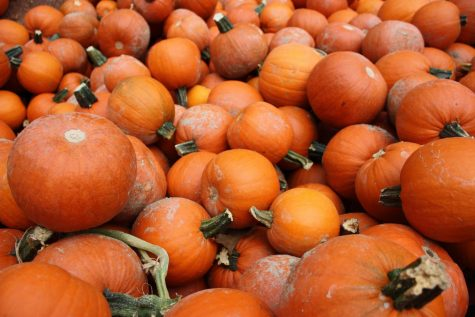 Local Fall Activities Open for the Season